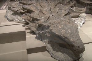 Rare Perfectly-Preserved Dinosaur Fossil Unveiled